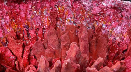 The Red Coral Geode | Interior detail